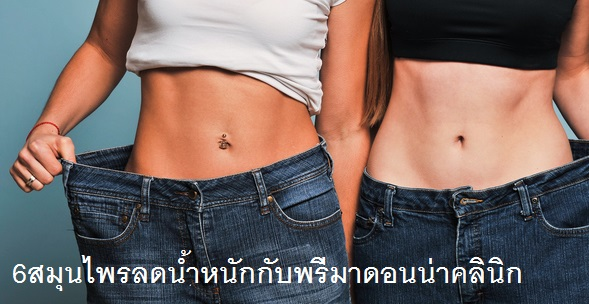Herbs for Weight Loss in Chiangmai